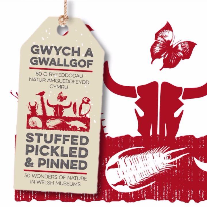 Cynhyrchiad Fideo Digwyddiad Byw Digidol Tantrwm Caerdydd Cymru Bryste Darllen Llundain Cymraeg